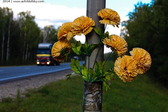 2014-08 flowers